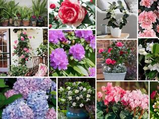 Φωτογραφία για 15 Φυτά κατάλληλα για σκιερά σημεία