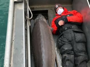 Φωτογραφία για Ντιτρόιτ: Βρήκαν ψάρι «γίγας» στο ποτάμι, εκτιμάται ότι είναι 100 ετών