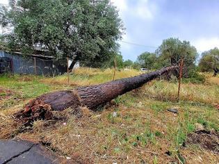 Φωτογραφία για Λέσβος: Ισχυροι άνεμοι «σαρώνουν» το νησί - Ζημιές σε σπίτια, κλειστά τα σχολεία