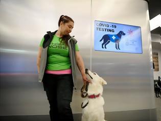 Φωτογραφία για Σκύλοι εκπαιδεύονται να «μυρίζουν» τον κορονοϊό. Ήδη χρησιμοποιούνται στην Φινλανδία