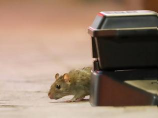 Φωτογραφία για Αυστραλία: Πανούκλα από εκατομμύρια ποντίκια που έχουν κατακλύσει μεγάλες πόλεις