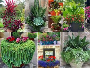 Φωτογραφία για 15 Συνδυασμοί Φυτών για Καλοκαιρινές γλάστρες-ζαρντινιέρες