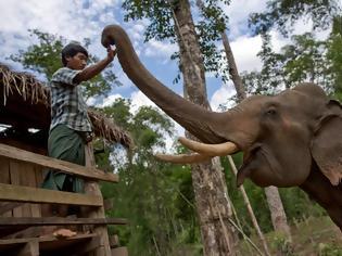 Φωτογραφία για Χωρικοί στη Μιανμάρ απελευθέρωσαν με ζητωκραυγές παγιδευμένους ελέφαντες από λάκκο