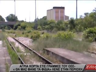 """Φωτογραφία για Σέρρες: Άγρια χόρτα στις γραμμές του ΟΣΕ- """"Θα μας φάνε τα φίδια"""", λένε στην περιοχή"""
