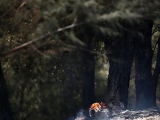Φωτογραφία για Θεσσαλονίκη: Σε ύφεση η πυρκαγιά στο Σέιχ Σου