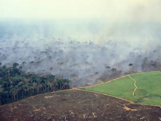 Φωτογραφία για Έρευνα: Το δάσος του Αμαζονίου εκπέμπει πλέον περισσότερο διοξείδιο του άνθρακα απ'ό,τι απορροφά