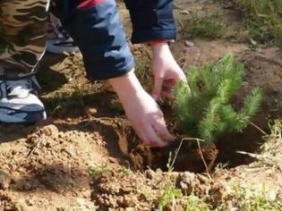 Φωτογραφία για Το φύτεμα νέων δέντρων θα αυξήσει τις καλοκαιρινές βροχές στη νότια Ευρώπη