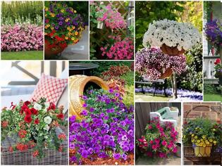 Φωτογραφία για Καλοκαιρινές προτάσεις για τον Κήπο ή το Μπαλκόνι σας με Πετούνιες