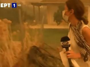 Φωτογραφία για ΕΡΤ: Ρεπόρτερ έσωσε γατάκι από τις φλόγες στην Εύβοια...