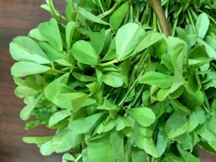 Φωτογραφία για Τριγωνέλλα, ένα από τα παλαιότερα φαρμακευτικά βότανα του πλανήτη