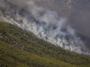 Φωτογραφία για Φωτιά Βίλια: Σε δύσβατο σημείο η πυρκαγιά, «ασφαλίστηκε» ο οικισμός - Στη μάχη και τα δύο Ilyushin