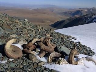 Φωτογραφία για Μογγολία: Τα χιόνια έλιωσαν αποκαλύπτοντας οστά ζώων και εργαλεία από την εποχή του Χαλκού