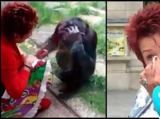 Φωτογραφία για Ζωολογικός κήπος στο Βέλγιο απαγόρευσε σε 38χρονη να βλέπει έναν χιμπατζή: «Έχουμε σχέση», λέει