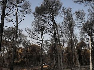 Φωτογραφία για Νεκρός από τη φωτιά της Βαρυμπόμπης