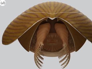 Φωτογραφία για Προϊστορικό πλάσμα τεράστιου μεγέθους ανακαλύφθηκε στον Καναδά - Ηλικίας άνω των 500 εκατ. ετών