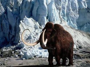 Φωτογραφία για Γενετική:  Θέλουν να αναδημιουργήσουν τα μαμούθ - Ανησυχούν οι επιστήμονες