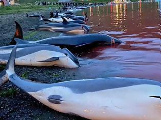 Φωτογραφία για Η θάλασσα βάφτηκε κόκκινη: Σκότωσαν 1.428 δελφίνια «για το έθιμο» στα Νησιά Φερόε