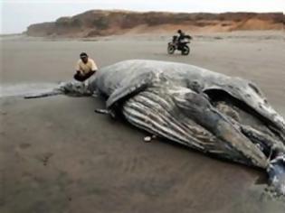 Φωτογραφία για ΔΕΙΤΕ: Άδοξο τέλος για έναν γίγαντα των θαλασσών