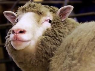 Φωτογραφία για Ντόλι, το πρώτο κλωνοποιηµένο πρόβατο