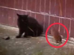 Φωτογραφία για VIDEO: Απίστευτο κι όμως αληθινό! Ποντίκι επιτίθεται σε γάτες!