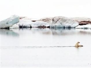 Φωτογραφία για ΣΥΓΚΛΟΝΙΣΤΙΚΗ ΕΙΚΟΝΑ: Πολική αρκούδα μεταφέρει στην πλάτη το μικρό της