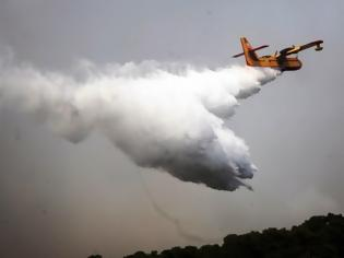 Φωτογραφία για Μεγάλος κίνδυνος πυρκαγιών στη Β. Ελλάδα λόγω της έντονης βλάστησης