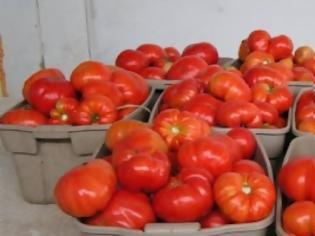 Φωτογραφία για Θα μοιράσουν πέντε τόνους ντομάτες