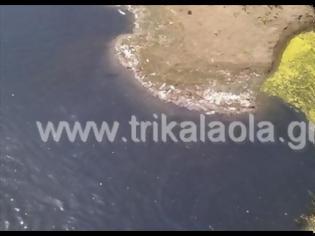 Φωτογραφία για Τρίκαλα: Οικολογική καταστροφή στον Πηνειό με εκατοντάδες νεκρά ψάρια!