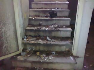 Φωτογραφία για Γάτες εγκλωβισμένες για μήνες σ' ένα υπόγειο στην Πανεπιστημίου