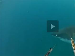 Φωτογραφία για VIDEO: Στενές επαφές με έναν μεγάλο λευκό καρχαρία