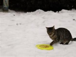 Φωτογραφία για ΔΕΙΤΕ: 10 λόγοι που οι γάτες υπερισχύουν των σκύλων!