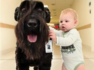 Φωτογραφία για Συγκινητικές εικόνες: Ο σκύλος - γίγαντας που βγάζει βόλτα τα παιδιά του νοσοκομείου!