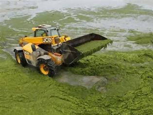 Φωτογραφία για Γενετικά τροποποιημένη E.coli παράγει βιοκαύσιμα από καφέ άλγη