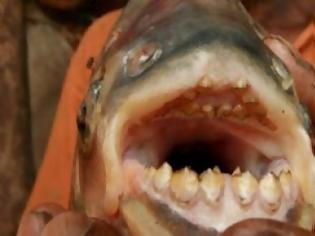 Φωτογραφία για Ψάρι- δολοφόνος σκότωσε δύο άντρες τρώγοντάς τους τους όρχεις! (video)