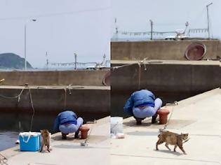Φωτογραφία για Πώς έχει προκύψει η έκφραση είναι γάτα...