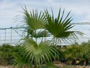 Φωτογραφία για Αγαπάτε τα φυτά, αλλά δεν έχετε γλάστρα; .. σκασίλα σας