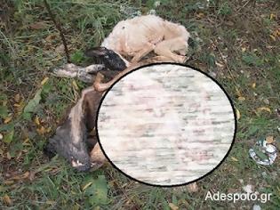 Φωτογραφία για ΣΟΚ! Κοζάνη : Κατακρεούργησαν τα αδέσποτα φοβούμενοι εξάπλωση της λύσσας