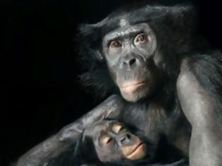 Φωτογραφία για Ζώα από την ανθρώπινη τους πλευρά! (ΦΩΤΟ)