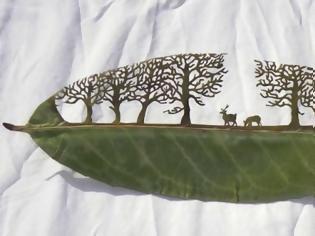 Φωτογραφία για Σκαλίζοντας …φύλλα δέντρων