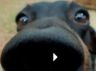 Φωτογραφία για Μεταμόσχευση κυττάρων χαρίζει κινητικότητα σε παράλυτους σκύλους,