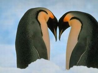 Φωτογραφία για Ερωτευμένοι πιγκουίνοι διατηρούν σχέση... 16 χρόνων!