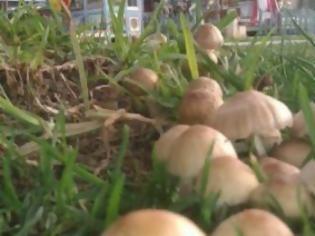 Φωτογραφία για Πάτρα: Φύτρωσαν μανιτάρια στα Ψηλαλώνια!
