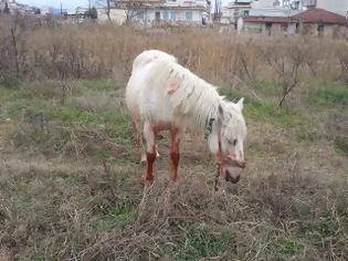 Φωτογραφία για Σκύλοι επιτέθηκαν σε άλογο στα Τρίκαλα