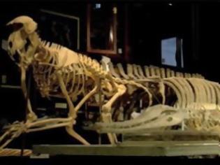 Φωτογραφία για Κλεμμένος δεινόσαυρος 70 εκατομμυρίων ετών αναμένεται να επιστρέψει στη Μογγολία