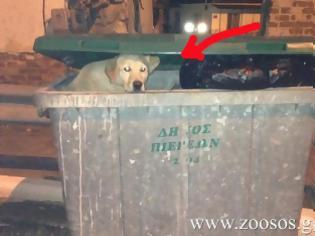 Φωτογραφία για Καβάλα: Έκλεισαν τον σκύλο στον σκουπιδοτενεκέ για πλάκα;