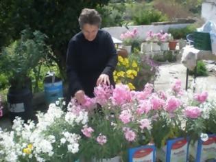 Φωτογραφία για Τα λουλούδια και οι ευωδίες «πλημμύρισαν» μια αυλή