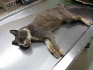 Φωτογραφία για Και δεύτερη γάτα νεκρή μετά από κλωτσιά στη Λυγιά Λευκάδας