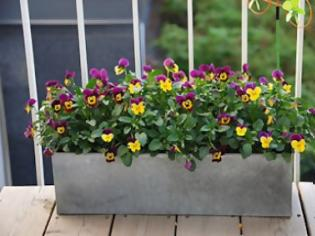 Φωτογραφία για Κηπουρική : Ανοιξιάτικες φροντίδες για τα φυτά του μπαλκονιού