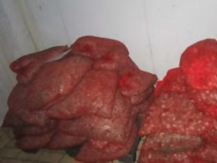Φωτογραφία για Αλεξ/πολη: 8 άτομα συνελήφθησαν για λαθρεμπόριο οστράκων. Κατασχέθηκε 1 τόνος