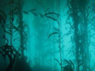 Φωτογραφία για Αρχαίο υποβρύχιο δάσος αποκάλυψε ο τυφώνας Κατρίνα